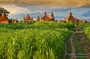 Temples among the Bagan fields