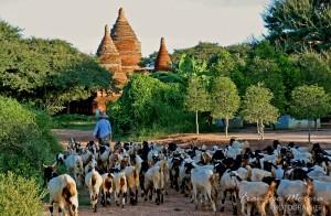 Cycling around Bagan