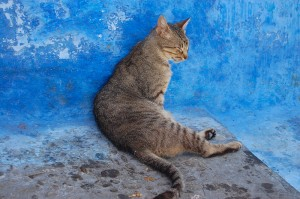 Cat at Chaouen