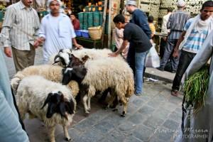 Rebaño de cabras en el centro del Cairo
