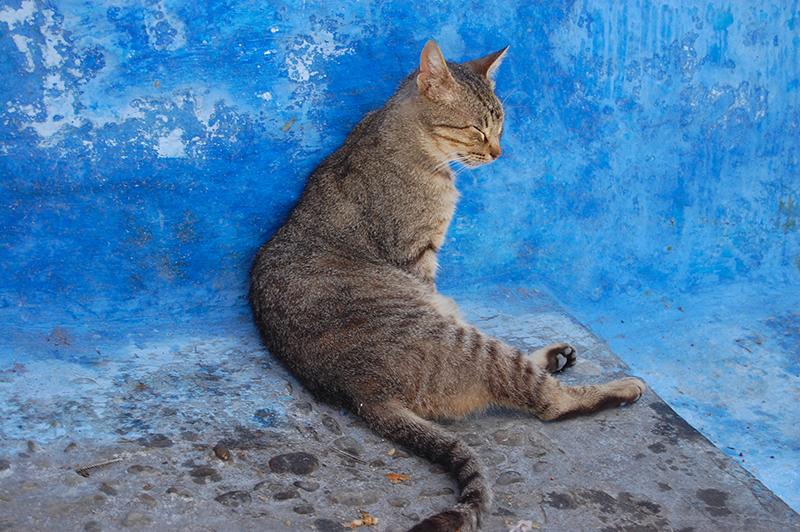 Gato en Chaouen