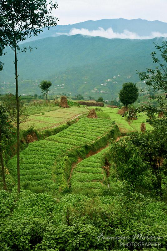 Campos del valle de Kathmandu