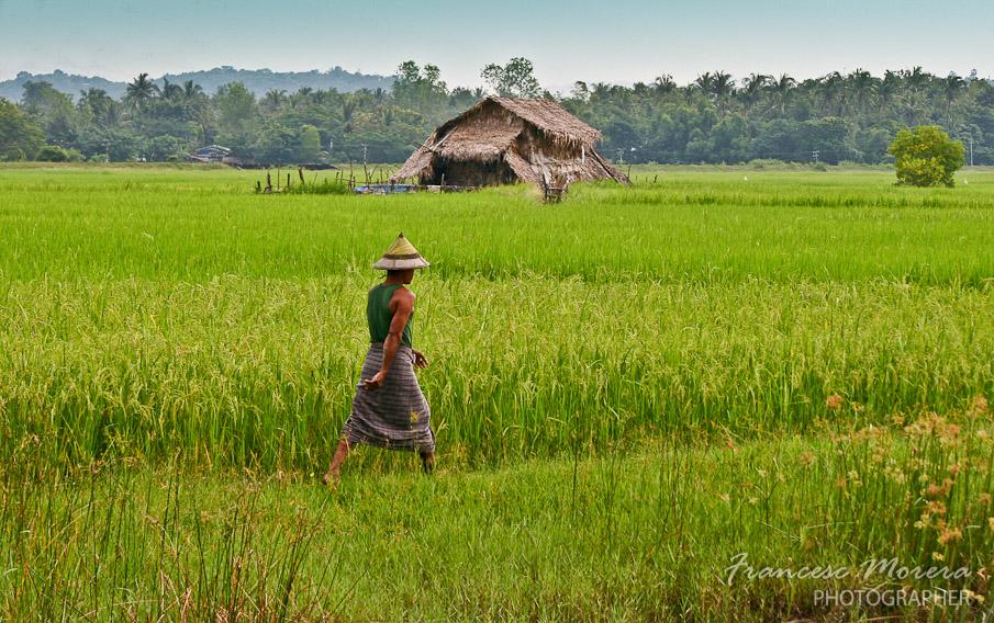 Campesino entre los campos de Bago
