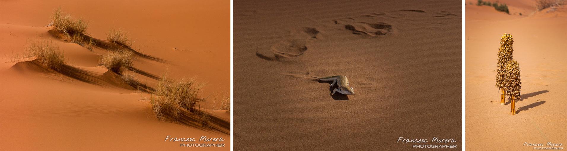desert_vida