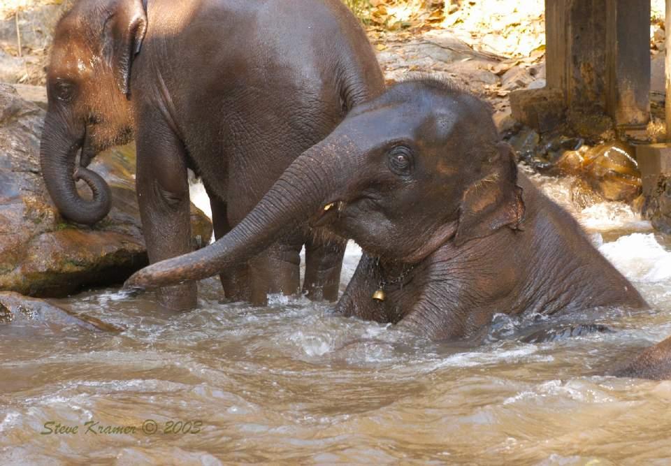 Elefantes dándose un baño