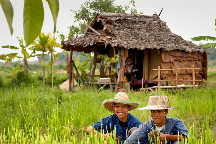 Chicos en los campos de arroz de Chiang Mai